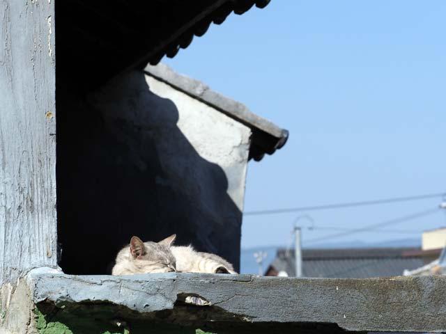 祝島、屋根の上の猫
