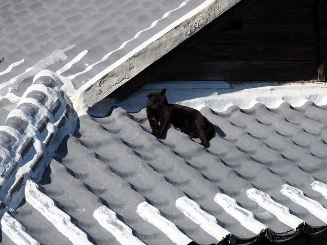 祝島、屋根の猫