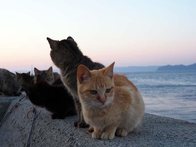 祝島、防波堤の猫