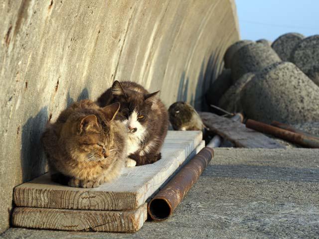 祝島、海辺の猫