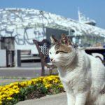 猫島・男木島の2018年猫密度チェック