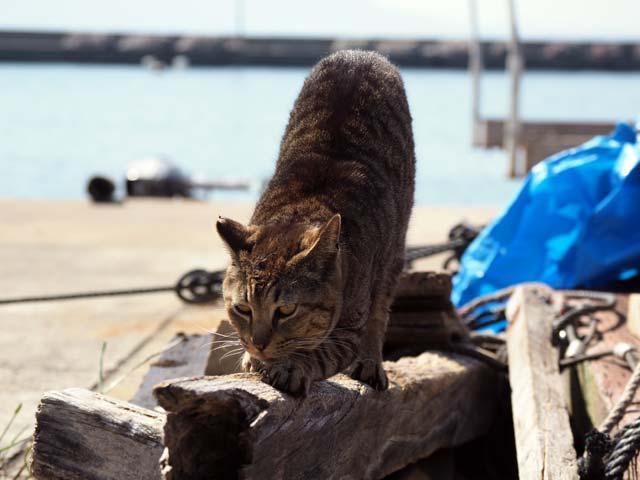 男木島の猫