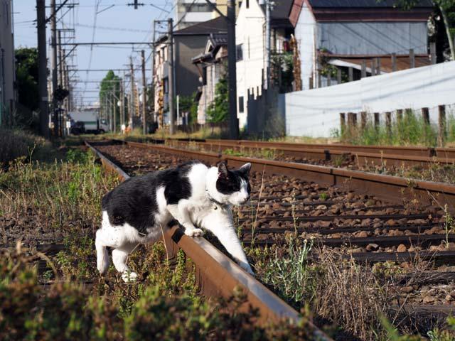 レールと猫