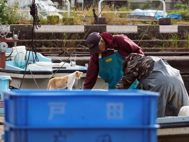 漁師さんと覗き込む猫