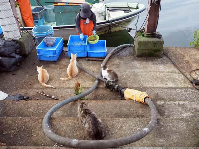 漁港で漁師さんを待つ猫