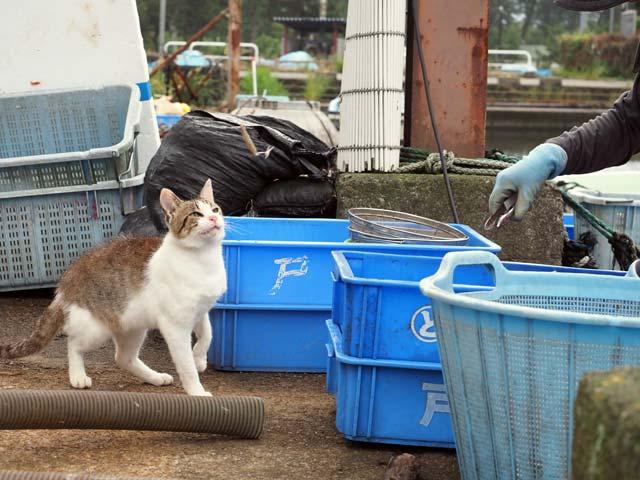 漁港で魚をねだる猫