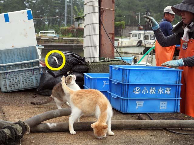 猫に魚をあげる漁師さん