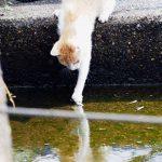 漁港の猫たちの日常