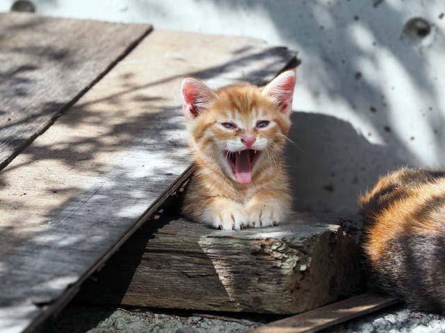 子猫の威嚇