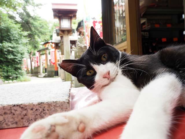ISO1250の猫写真例
