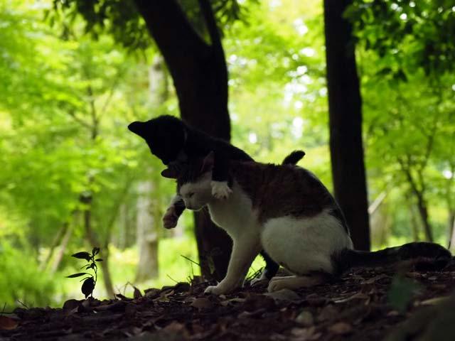 ISO6400の猫写真例