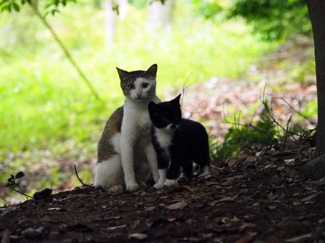 ISO8000の猫写真例