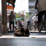 大阪の下町には猫がたくさん