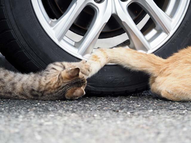 尻尾で遊ぶ子猫