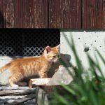 再び滋賀の漁港の猫たち