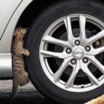 タイヤ点検する猫