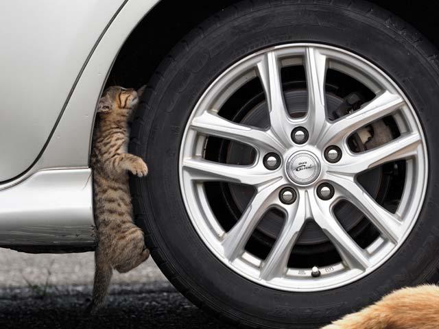 タイヤを点検する猫