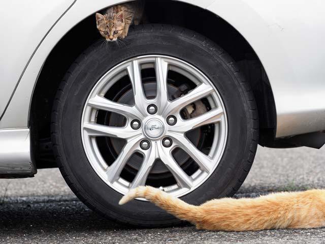 タイヤに登る猫