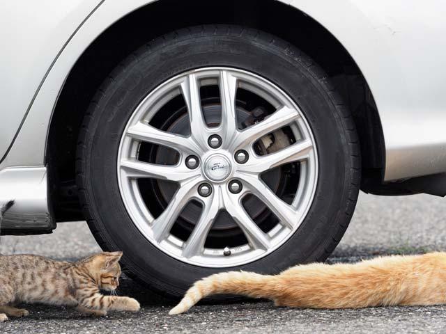 尻尾で遊ぶ猫
