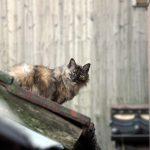 目を引いた猫