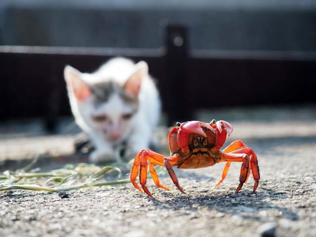 カニと子猫