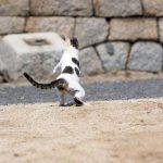 トンボを追う猫