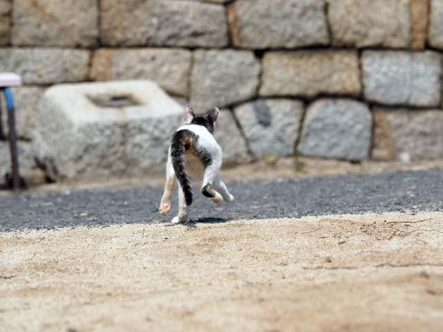 飛び出す猫