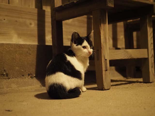 夜中の佐栁の猫