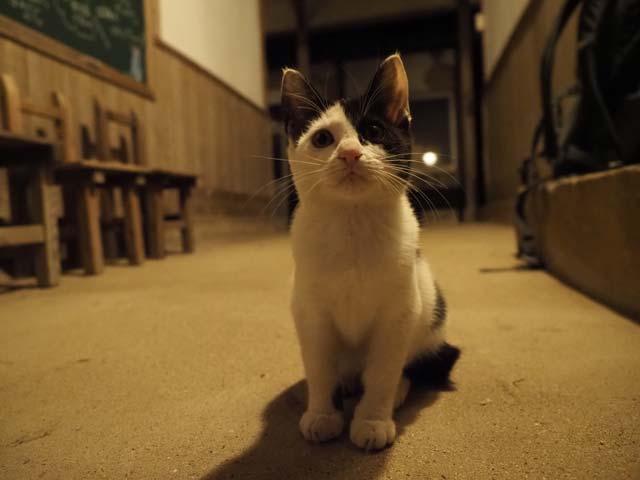 佐栁の子猫