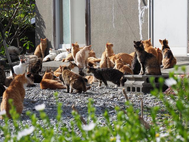 深島の猫密度
