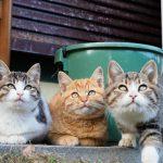 九州の猫の楽園、深島にて