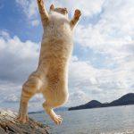 四国の猫島、本島で元気な猫さんと