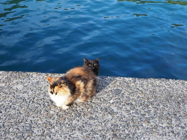 深島で最初にあった猫