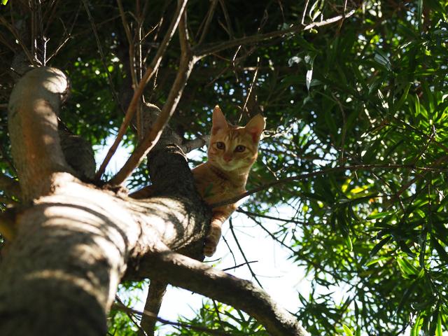 木の上にも猫、深島