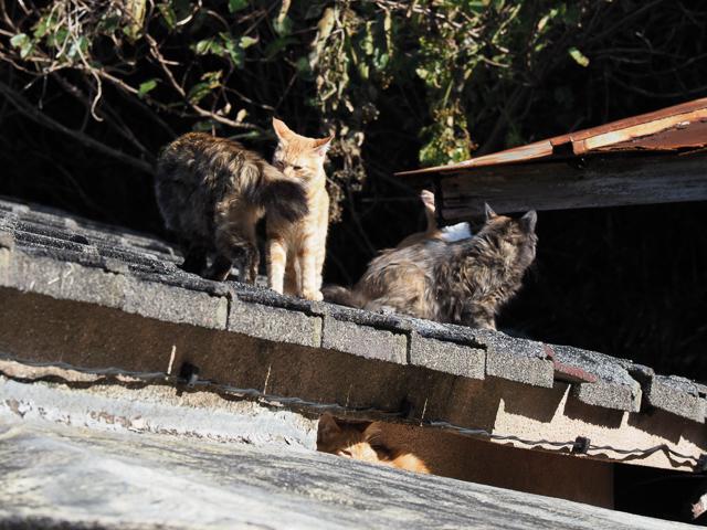 深島、屋根の上の猫