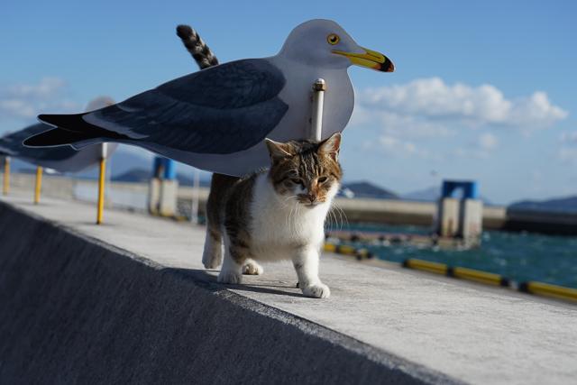 女木島の猫