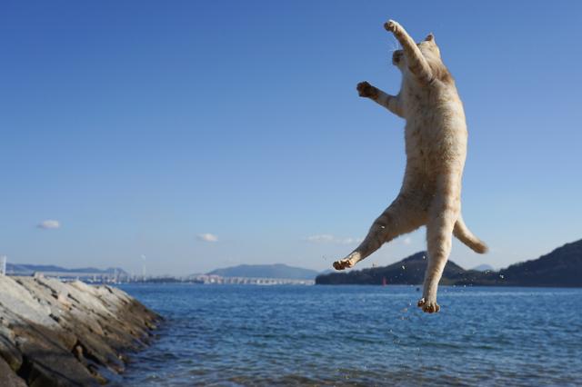 本島の子猫のジャンプ