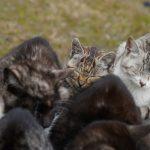 猫が固まると温まる