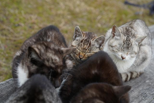 猫が固まって暖をとっている