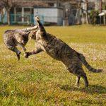兄弟仲良く遊ぶ猫