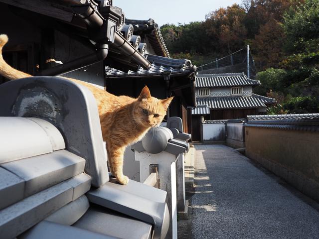 本島、古い建物と猫