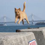 本島は猫島だった