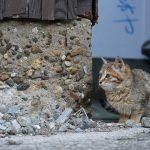 港町で出会った仔猫