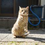 港町の猫、再び