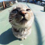 魚眼レンズの特性を生かした猫写真