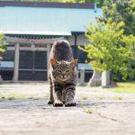 望遠レンズの特性を生かした猫写真