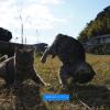 失敗した猫写真をライトルームで成功写真にするコツ(逆光補正編)
