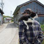 佐久島で猫写真に挑戦