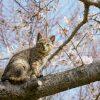 春をテーマにした猫写真