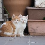 別府温泉の猫密度調査